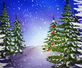 Pines Winter Backdrop — Stock Photo