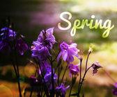 Spring Photo Background — Stock Photo