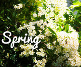 Spring Photo Background — Stock Photo