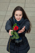 Nice girl wants to compliment with red rose — Stock Photo