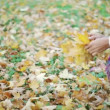 Girl gathers yellow leaves in autumn — Stock Video
