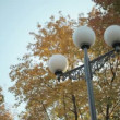 Stock Video: Autumn park with yellow trees