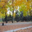 Autumn park with yellow trees — Stock Video #14865925