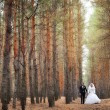 Bride and groom in a pine forest in autumn — Stock Photo