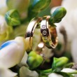 Two Golden Wedding Rings on flowers macro shot — Stock Photo