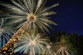 Palm trees decorated with Christmas garland night — Stock Photo