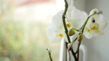 Beautiful white flower and chain on a blurred background — Vídeo de stock