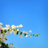 Blooming spring tree branches with white flowers over blue sky, abstract border nature background — Stock Photo