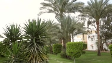 Beautiful green vegetation and palm trees on the hotel — Stock Video