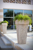 Pot with a plant at the entrance to a luxurious hotel — Stock Photo