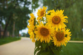 Bouquet of yellow sunflowers on a green background — ストック写真