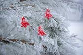 Fundo de inverno dos pinheiros cobertos de neve decorado — Fotografia Stock