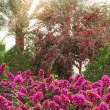 Beautiful rhododendron bushes in an arboretum outdoor park — Stok fotoğraf