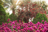 Beautiful rhododendron bushes in an arboretum outdoor park  — Stock Photo