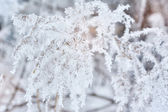 Winter background, close up of frosted pine branch on a snowing  — Stock Photo