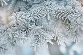 Photo of frozen fir tree background, branches of evergreen tree  — Stock Photo