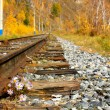 Small flowers struggling to survive along the rocky railroad tracks — Stock Photo