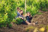 Família de camisa listrada na vinha — Foto Stock