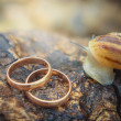 A snail and wedding rings — Stock Photo