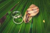 Two diamond rings — Stock Photo