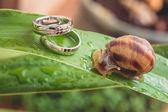 Diamond wedding rings — Stock Photo