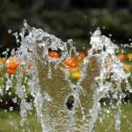 Water splash — Stock Photo #13177404
