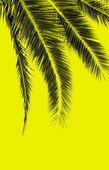 黄色の背景に黒のシュロを葉します。 — ストック写真