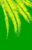 Yellow palm leaves on green background — Stock Photo