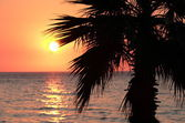 Sunset and palm tree on the beach — Stock Photo