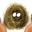 Royalty-Free Stock Photo: Bird nest, eggs and protective hands