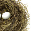 Bird nest and eggs — Stock Photo #13525102