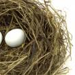 Bird nest and eggs — Stock Photo