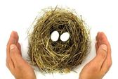 Bird nest, eggs and protective hands — Stock Photo