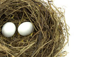 Bird nest and eggs — Stock Photo
