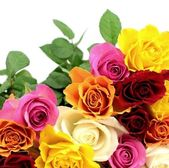 Colorful roses — Stock Photo