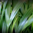 Green tropical leaves — Stock Photo
