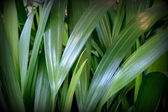 Foglie verde tropicale — Foto Stock