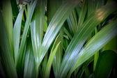 Gröna tropiska lämnar — Stockfoto