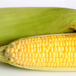 图库照片: Fresh corn cobs