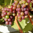 Foto Stock: Organic red grapes