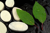 Green leaves with water drops, and white stones — Stock Photo