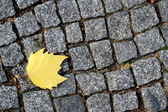 Road paving stones and yellow leaf. — Stock Photo
