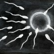 Fertilization of sperm and egg — ストック写真