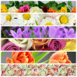 Flower collage — Stock Photo #25872065