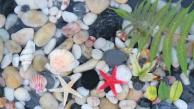 Star fishes, pebble stones and seashells — Stock Video