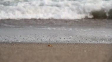 Beach and sea wave. — Stock Video