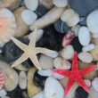 Pebble stones, seashell and starfish — Stock Video #34778015