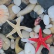 Starfishes, pebble stones and seashells - HD video with sound - — Stock Video