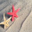 Seastar and beach sand — Stock Photo