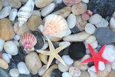Seashell, starfish and colorful pebble stones. — Stock Photo